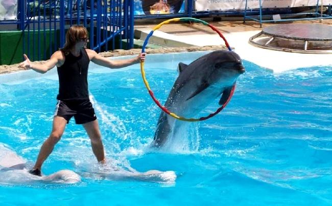 Дельфинарий и аквапарк Троя в Белеке