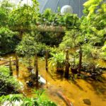 аквапарк Тропические Острова, оснащен настоящим аналогом джунглей в уменьшенном формате